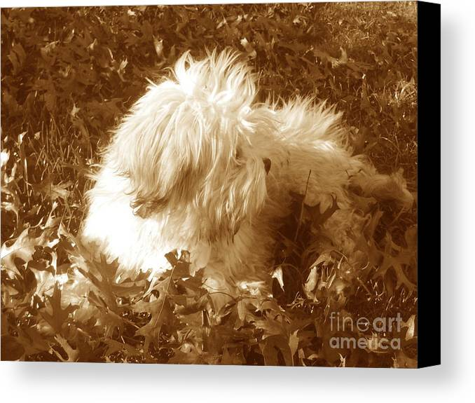 Dog Teddy Outdoors Leaves Fall Autumn Animals Canvas Print featuring the photograph Autumn Breeze 2 by Reina Resto