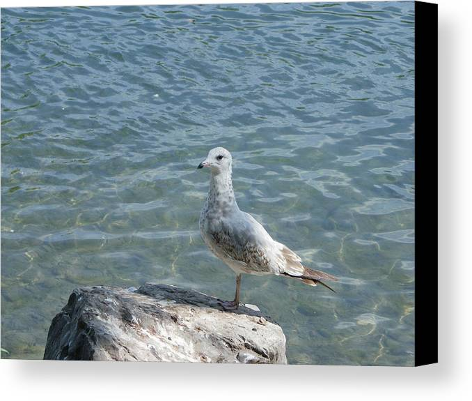 Birds Canvas Print featuring the photograph Away From The Crowd by Peggy King