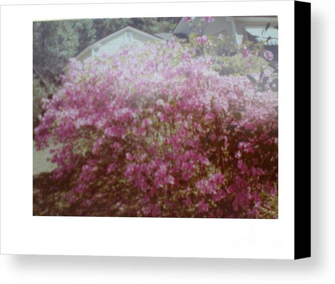 Azalea's Canvas Print featuring the photograph Azalea Framed By Roof by Hal Newhouser