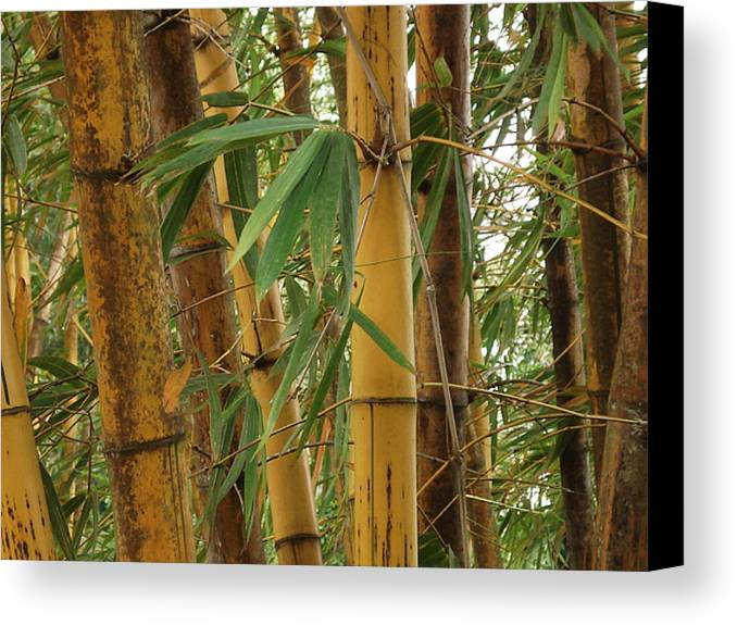 Bamboo Canvas Print featuring the photograph Bamboos by Athira S S