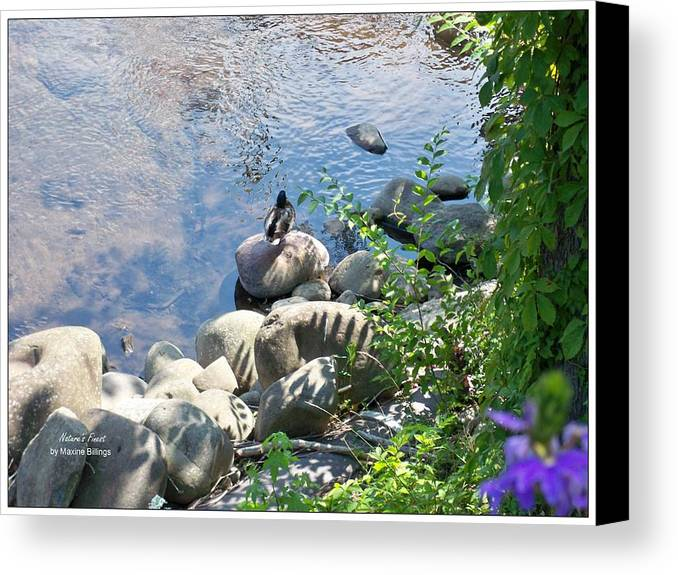Ducks Canvas Print featuring the photograph Basking On A Rock by Maxine Billings