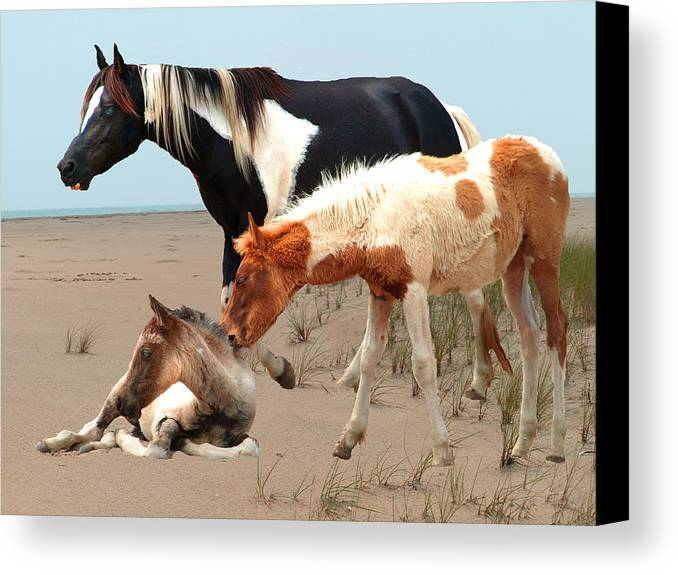 Pinto Canvas Print featuring the painting Beach Babies by Kim