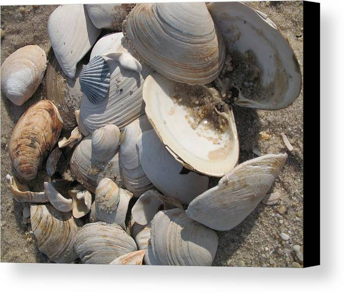 Beach Canvas Print featuring the photograph Beach Still Life IIi by Christiane Schulze Art And Photography