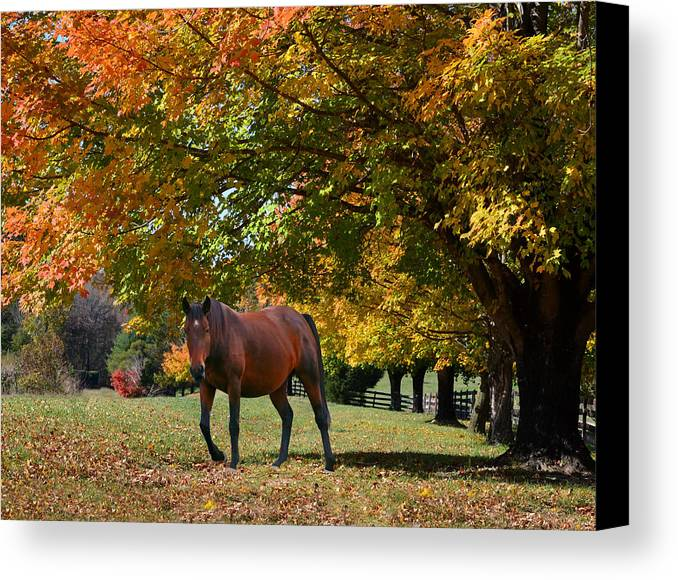 Bay Horse Canvas Print featuring the photograph Beautiful Bay Horse In Fall by Sandi OReilly