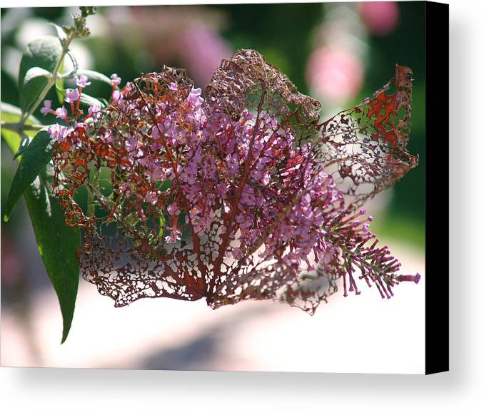 Flower Canvas Print featuring the photograph Beautiful Lady In A Spanish Veil by Kevin Callahan