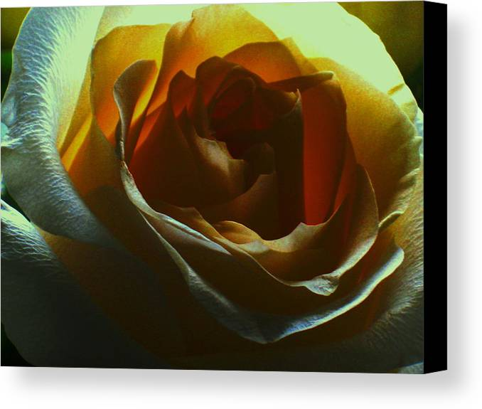 Rose Canvas Print featuring the photograph Beauty Within by Erika Lesnjak-Wenzel