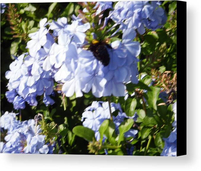 Bee And Flowers Canvas Print featuring the photograph Bee And Flowers Iv by Edward Wolverton