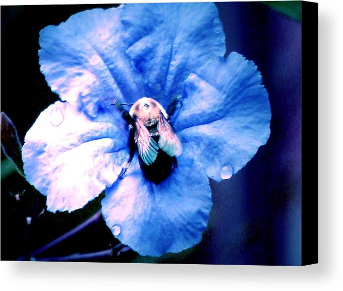 Bee Canvas Print featuring the photograph Bee On Blue Flower by Ramona Barnhill