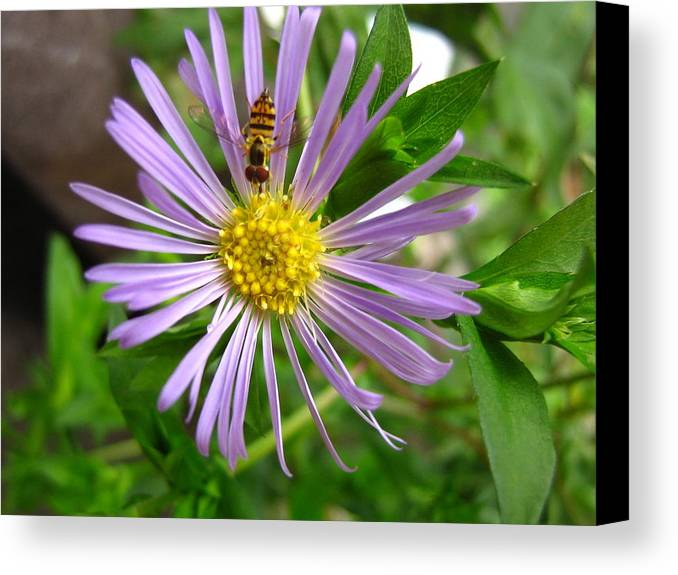 Bee Canvas Print featuring the photograph Bee On Wildflower by Melissa Parks