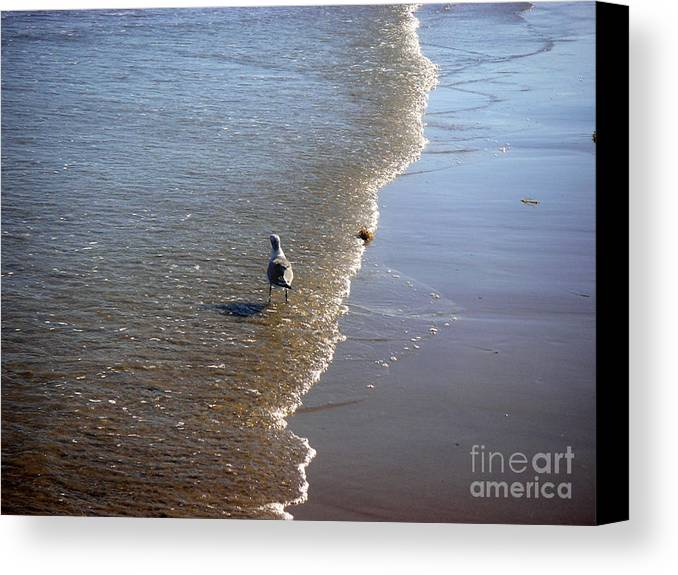 Nature Canvas Print featuring the photograph Being One With The Gulf - Ahead by Lucyna A M Green