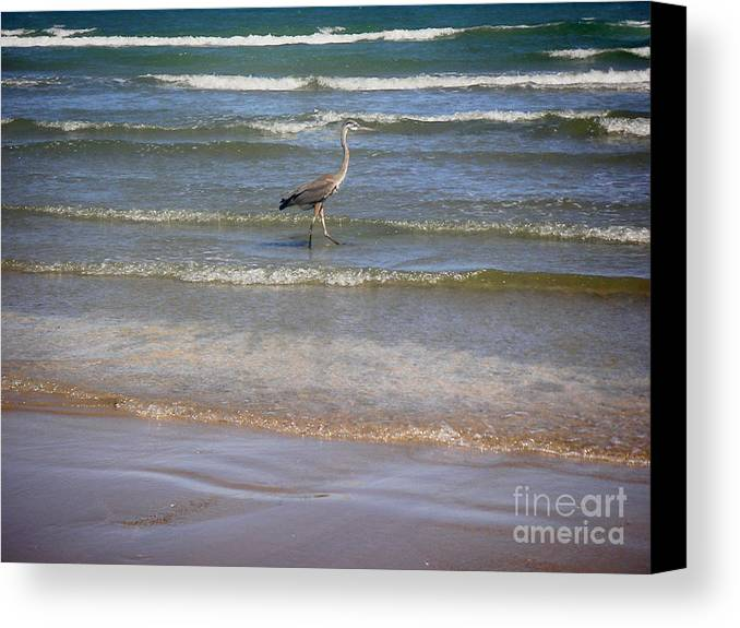 Nature Canvas Print featuring the photograph Being One With The Gulf - Alert by Lucyna A M Green