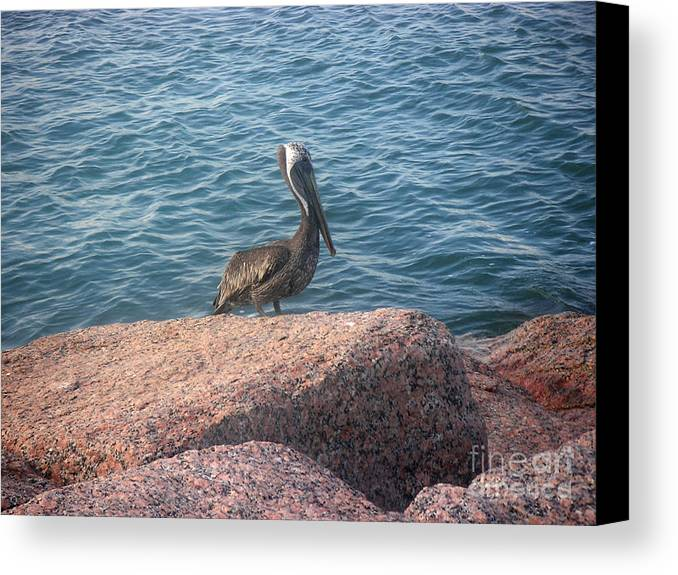 Nature Canvas Print featuring the photograph Being One With The Gulf - Anticipating by Lucyna A M Green