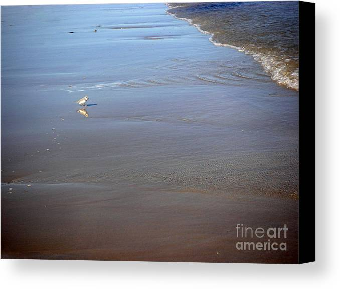 Nature Canvas Print featuring the photograph Being One With The Gulf - Cautious by Lucyna A M Green
