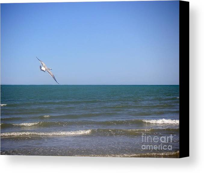 Nature Canvas Print featuring the photograph Being One With The Gulf - Soaring by Lucyna A M Green