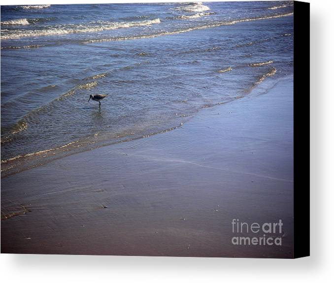 Nature Canvas Print featuring the photograph Being One With The Gulf - Spotting by Lucyna A M Green