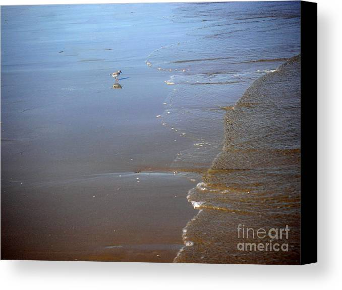 Nature Canvas Print featuring the photograph Being One With The Gulf - Still by Lucyna A M Green