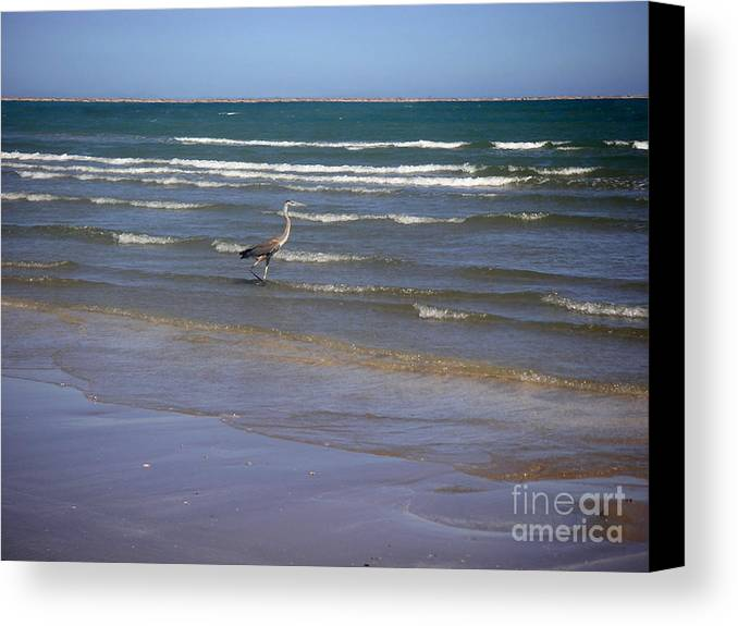 Nature Canvas Print featuring the photograph Being One With The Gulf - Wading by Lucyna A M Green