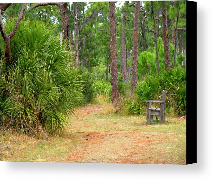 Landscape Canvas Print featuring the photograph Bench On The Nature Walk by Rosalie Scanlon