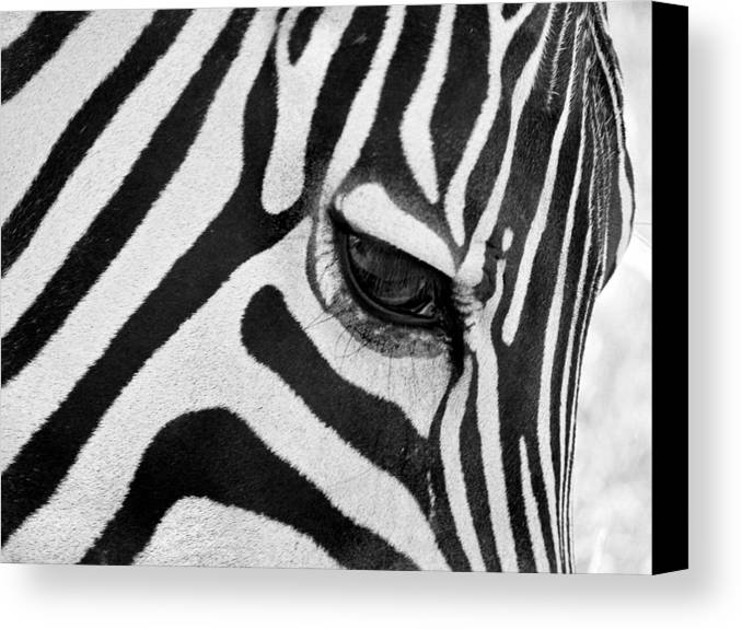 Zebra Canvas Print featuring the photograph Black And White Zebra Close Up by Pierre Leclerc Photography