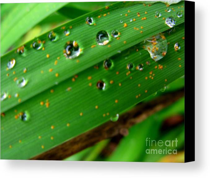 Plant Canvas Print featuring the photograph Blades by PJ Cloud