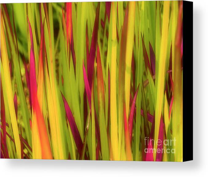 Grass Canvas Print featuring the photograph Blood Grass by Tara Turner