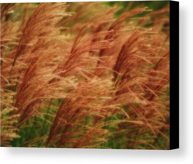 Win Canvas Print featuring the photograph Blowing In The Wind by Gaby Swanson