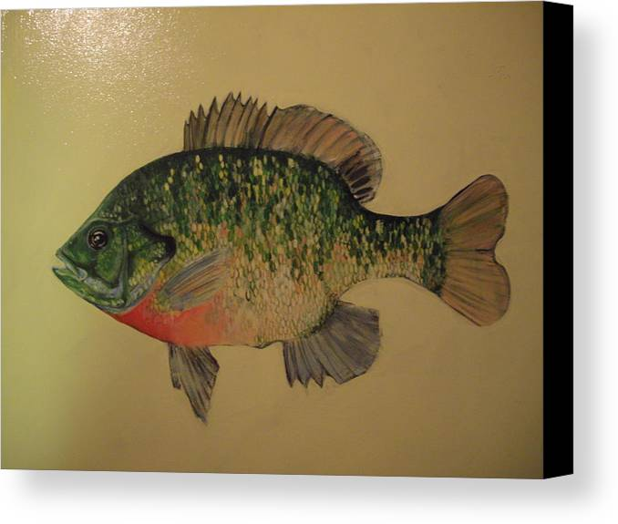 Bluegill Fish Canvas Print featuring the painting Bluegill by Robert Cunningham