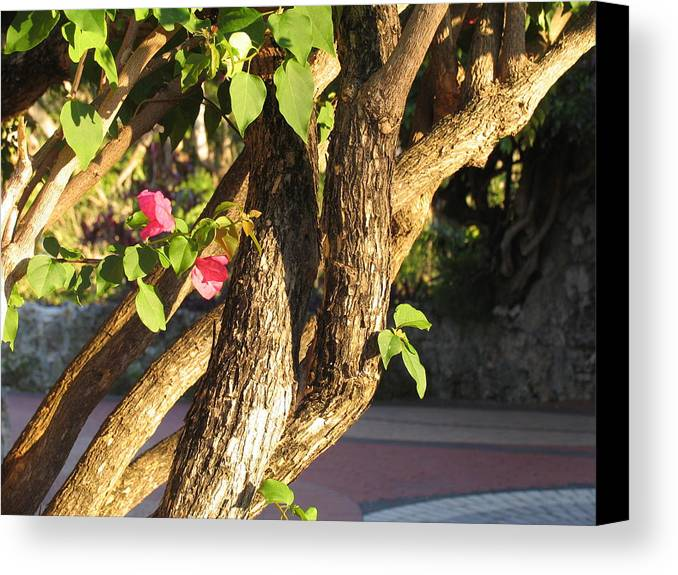 Pink Canvas Print featuring the photograph Braided by Stephanie Richards