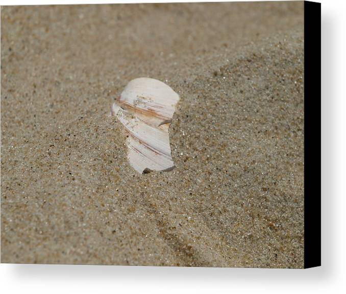 Sand Canvas Print featuring the photograph Broken Shell by Kim