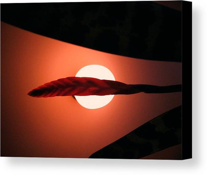 Beauty! .... Simple At Is! Canvas Print featuring the photograph Bromeliad by Nereida Slesarchik Cedeno Wilcoxon
