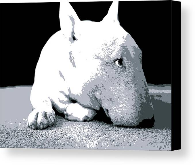 English Bull Terrier Canvas Print featuring the digital art Bull Terrier White On Black by Michael Tompsett