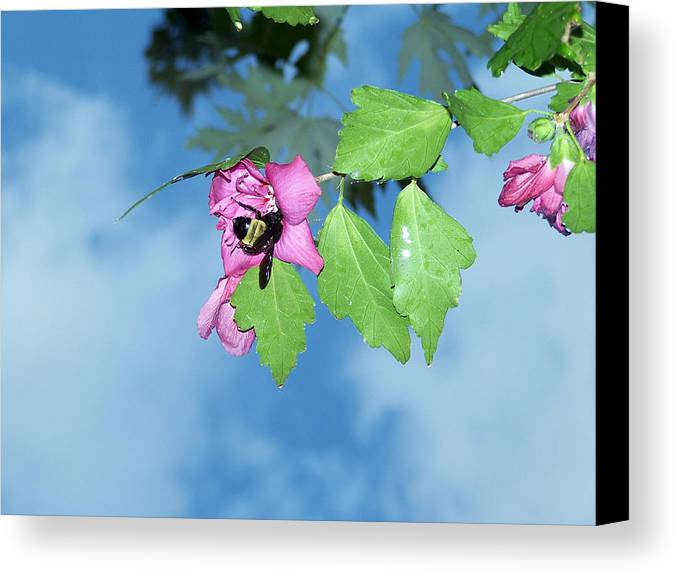 Bumble Bee Photography Canvas Print featuring the photograph Bumble Bee 2 by Evelyn Patrick