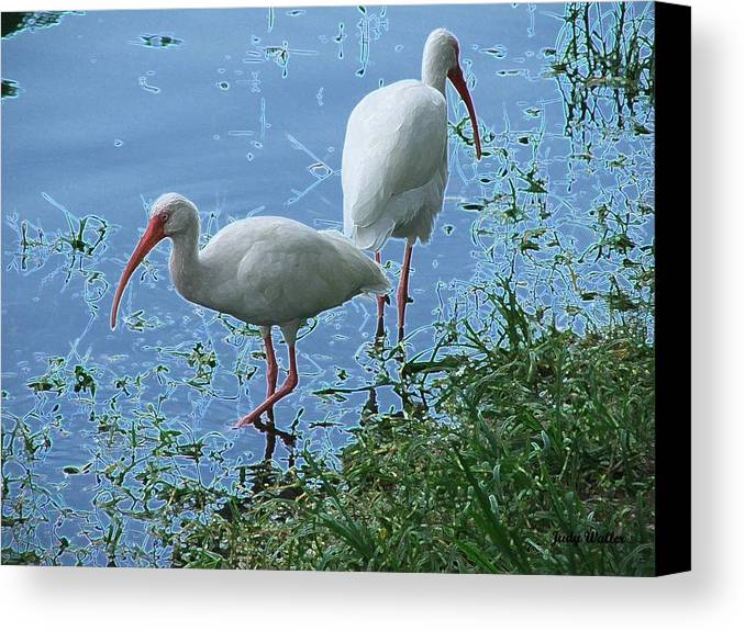 Birds Canvas Print featuring the photograph Butt To Butt by Judy Waller