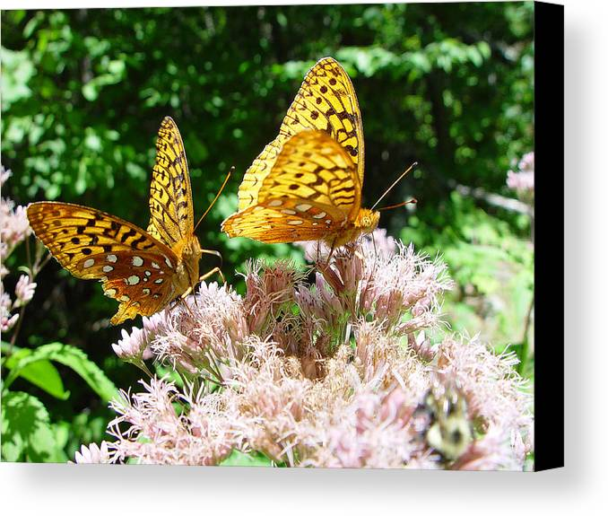 Nature Canvas Print featuring the photograph Butterflies by Eric Workman
