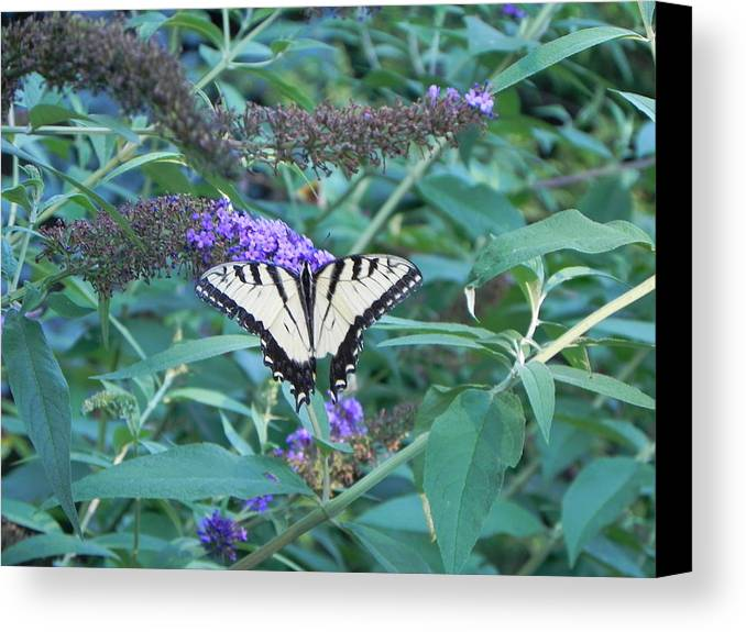 Canvas Print featuring the photograph Butterfly by John Parry