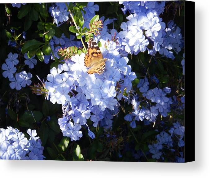 Butterfly Canvas Print featuring the photograph Butterfly Viii by Edward Wolverton