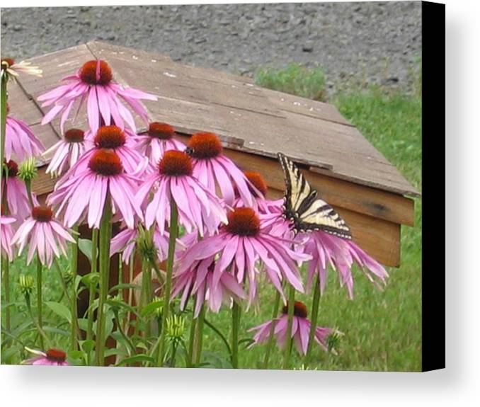 Canvas Print featuring the digital art Butterfly's Lunch by Barb Morton