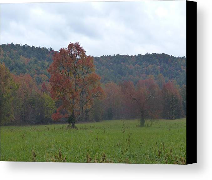 Landscape Canvas Print featuring the photograph Cades Cove 3 by Cindy McFadden