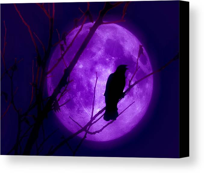 Moon Canvas Print featuring the photograph Calling Out To The Night by Kenneth Krolikowski