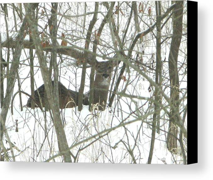 Nature Canvas Print featuring the photograph Can You See Me by Martie DAndrea