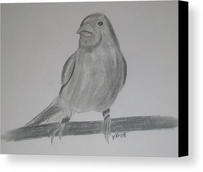 Bird Canvas Print featuring the drawing Canary by Kristen Hurley