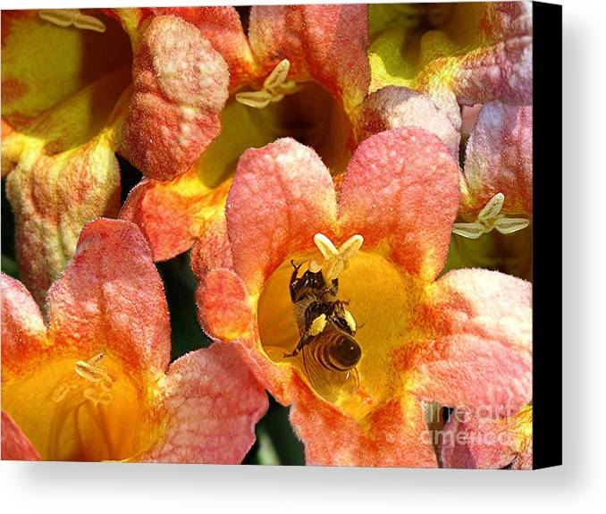 Nature Canvas Print featuring the photograph Caught Up In The Work by Lucyna A M Green