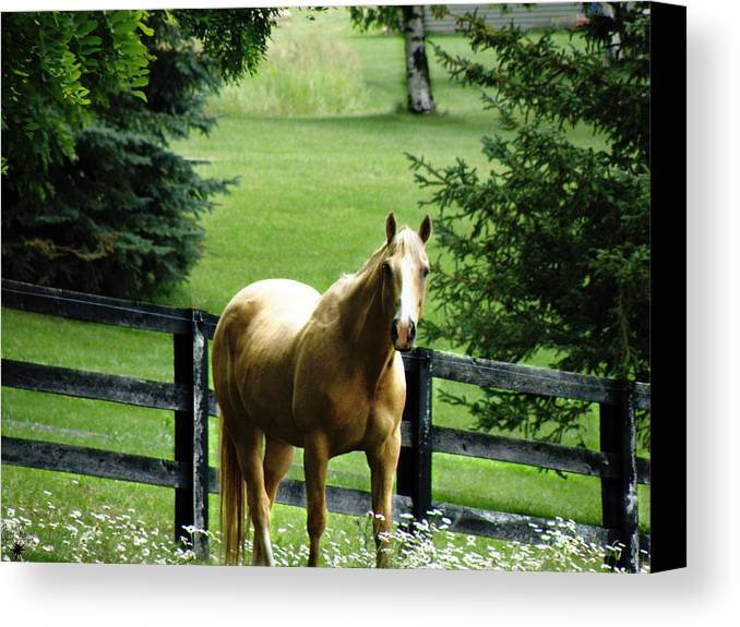 Chestnut Canvas Print featuring the photograph Chestnut by Scott Hovind