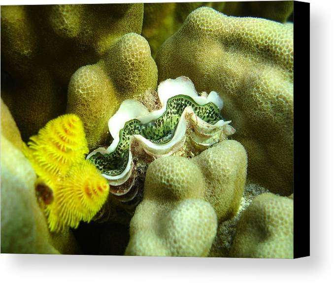 Underwater Canvas Print featuring the photograph Clam On The Reef by Chad Natti