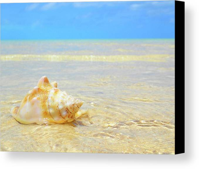 Bahamas Canvas Print featuring the photograph Clarity, Simplicity by Lora Louise