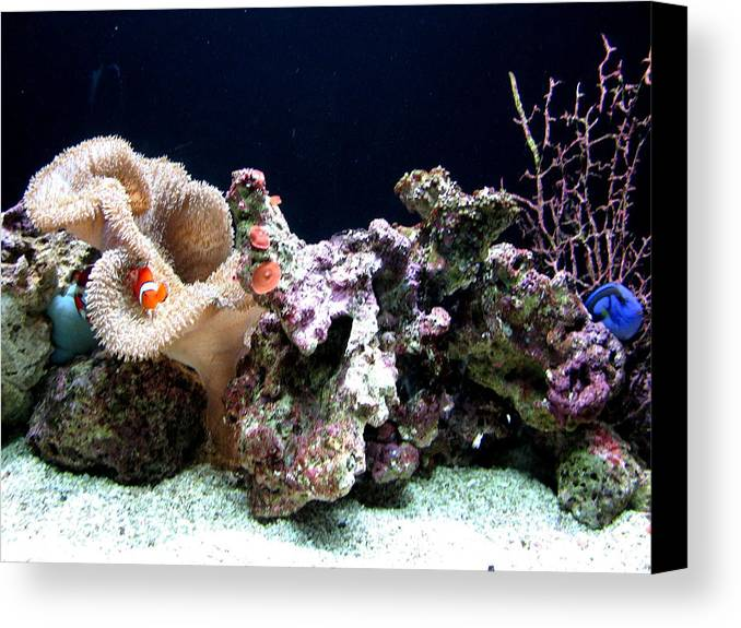 Fish Canvas Print featuring the photograph Clown Fish Reef by Jess Thorsen