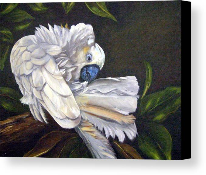 Birds Canvas Print featuring the painting Cockatoo Preening by Anne Kushnick