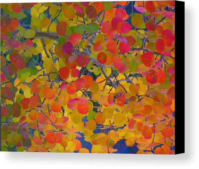 Fall Autumn Aspen Trees Colorful Gold Colorado Canvas Print featuring the photograph Colorful Aspen by George Tuffy