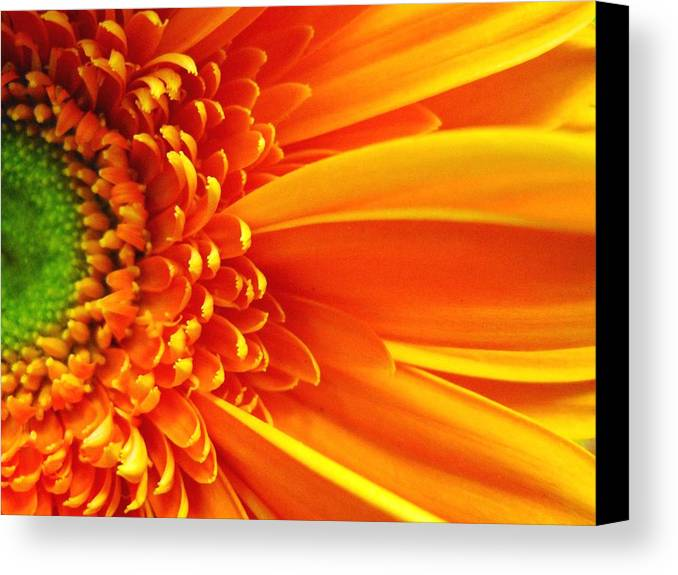 Red Canvas Print featuring the photograph Colors Galore by Rhonda Barrett