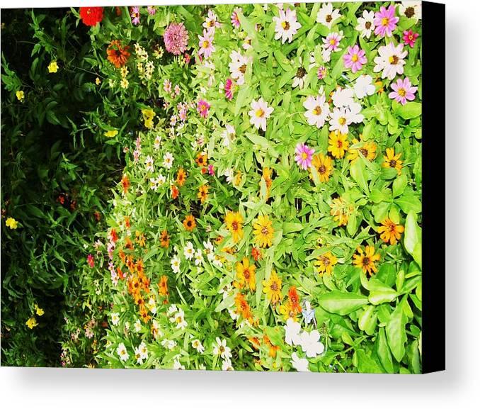 Natures Beautiful Colors. Canvas Print featuring the photograph Colors by Nereida Slesarchik Cedeno Wilcoxon